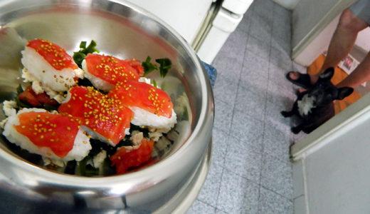 夏バテ犬と寿司