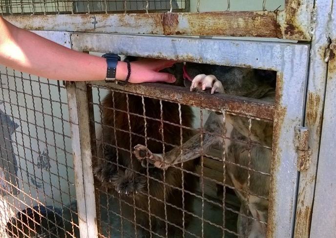 セルビアの野犬事情 ~ ベオグラードでは殺処分はありません