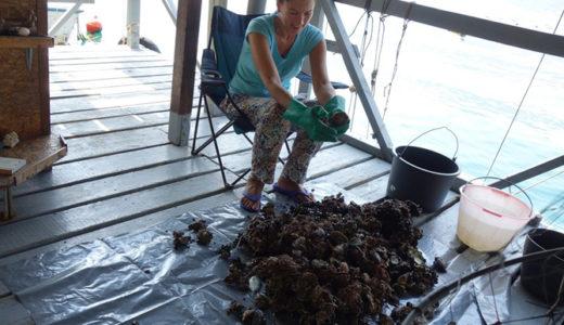 【モンテネグロ】牡蠣の養殖場でイートイン! Školjke Boke(シュコルケ ボケ)